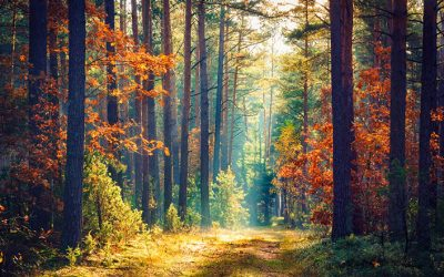 Der Wald als Landschaftsparkprojekt