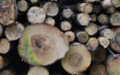 Holzbauoffensive für die Region Stuttgart